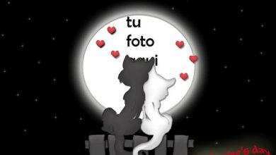 Amantes De Los Gatos Marco Para Foto 390x220 - Amantes De Los Gatos Marco Para Foto