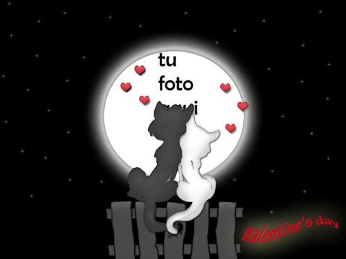 Amantes De Los Gatos Marco Para Foto - Amantes De Los Gatos Marco Para Foto
