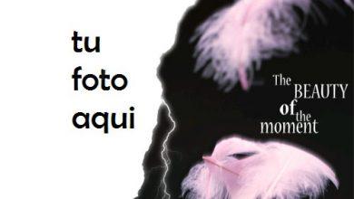 Belleza Del Momento Marco Para Foto 390x220 - Belleza Del Momento Marco Para Foto