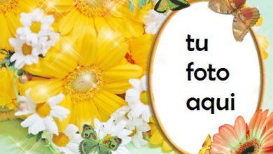 Eres Como Flores Y Rosas Marco Para Foto 390x220 - Eres Como Flores Y Rosas Marco Para Foto