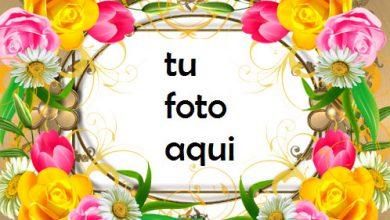 Eres Una Rosa En Medio De Flores Marco Para Foto 390x220 - Eres Una Rosa En Medio De Flores Marco Para Foto