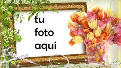 Flores De Tulipán Marco Para Foto 390x220 - Flores De Tulipán Marco Para Foto