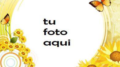 Sol Mariposas Y Amor Marco Para Foto 390x220 - Sol Mariposas Y Amor Marco Para Foto