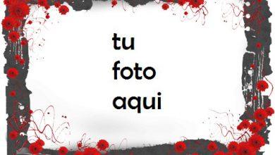 Amor rosa Marco Para Foto 390x220 - Amor rosa Marco Para Foto