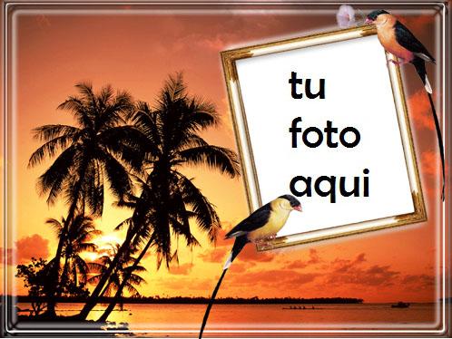 Atardecer En Una Isla Junto Al Mar Marco Para Foto - Atardecer En Una Isla Junto Al Mar Marco Para Foto