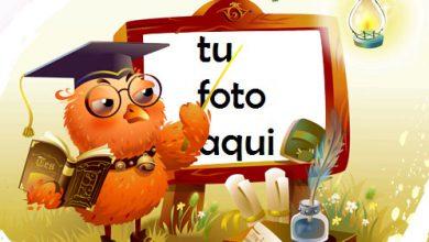 Búho Sabio Marco Para Foto 390x220 - Búho Sabio Marco Para Foto