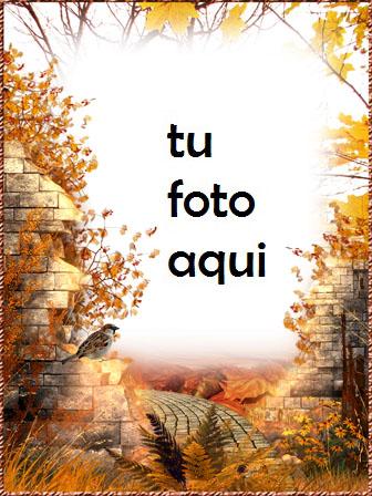 Camino Otoño Marco Para Foto - Camino Otoño Marco Para Foto