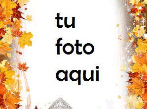 Photo of Ciudad de otoño flores de otoño Marco Para Foto