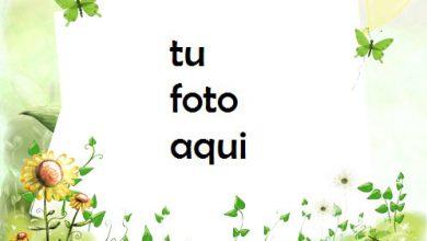 Con Mariposas Verdes Marco Para Foto 390x220 - Con Mariposas Verdes Marco Para Foto