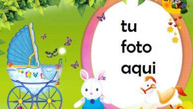 Conejito Bebé Marcos Para Foto 390x220 - Conejito Bebé Marcos Para Foto
