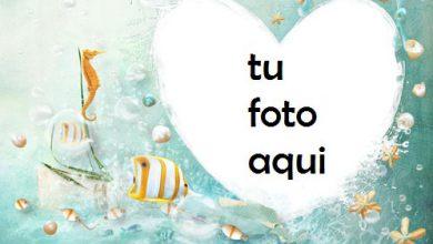 Photo of Corazón Bajo El Agua Con Los Peces Más Bellos Marco Para Foto