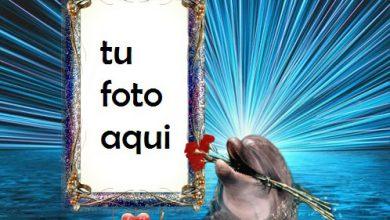 Delfines En El Agua Marco Para Foto 390x220 - Delfines En El Agua Marco Para Foto