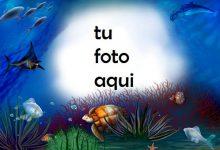 Delfines Tortugas Y Peces Bajo El Agua Marco Para Foto 220x150 - Delfines Tortugas Y Peces Bajo El Agua Marco Para Foto