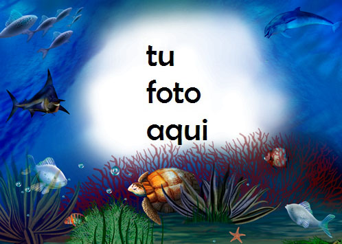 Delfines Tortugas Y Peces Bajo El Agua Marco Para Foto - Delfines Tortugas Y Peces Bajo El Agua Marco Para Foto