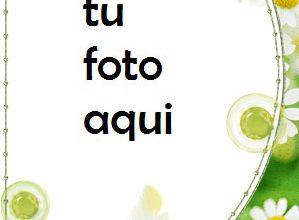 Delicadas Flores De Manzanilla Marco Para Foto 299x220 - Delicadas Flores De Manzanilla Marco Para Foto