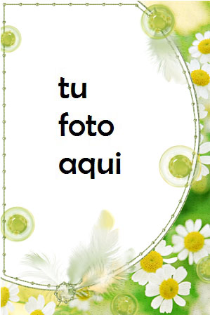 Delicadas Flores De Manzanilla Marco Para Foto - Delicadas Flores De Manzanilla Marco Para Foto