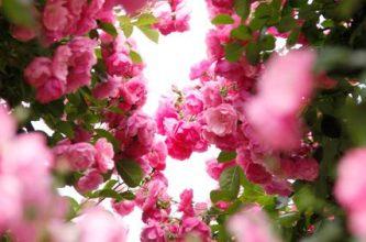 Photo of Escribir En Foto Cuadro de flores naturales y románticas
