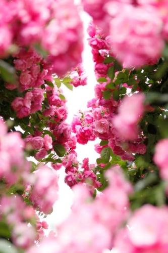 Escribir En Foto Cuadro de flores naturales y románticas 1 - Escribir En Foto Cuadro de flores naturales y románticas