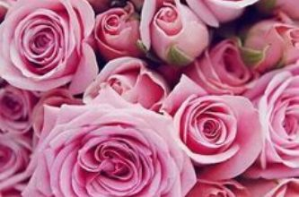 Photo of Escribir En Foto Hermosa rosa azul
