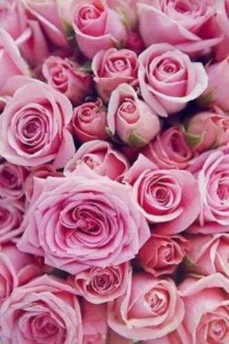 Escribir En Foto Hermosa rosa azul 1 - Escribir En Foto Hermosa rosa azul