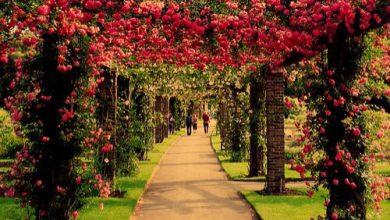 Photo of Escribir En Foto Imagen de la forma más hermosa rosa esplendor en belleza