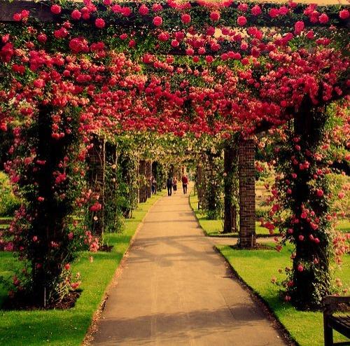 Escribir En Foto Imagen de la forma más hermosa rosa esplendor en belleza 1 - Escribir En Foto Imagen de la forma más hermosa rosa esplendor en belleza
