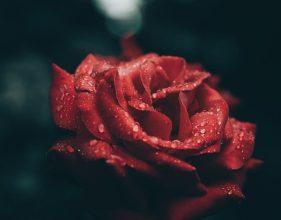 Photo of Escribir En Foto Imagen de la mejor rosa roja