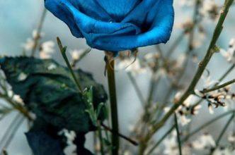 Photo of Escribir En Foto Imagen de las flores naturales más bellas en una copa romántica