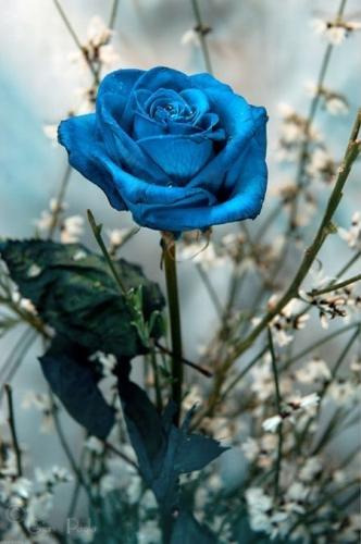 Escribir En Foto Imagen de las flores naturales más bellas en una copa romántica 1 - Escribir En Foto Imagen de las flores naturales más bellas en una copa romántica