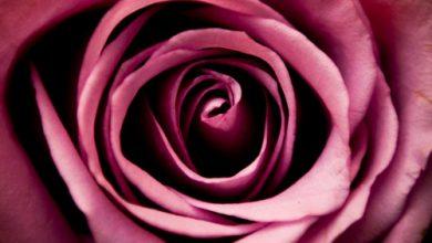 Escribir En Foto La imagen más bella de delgada romántica romántica 1 390x220 - Escribir En Foto La imagen más bella de delgada romántica romántica