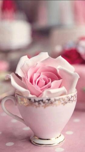 Escribir En Foto La imagen rosa más hermosa de los amantes. 1 - Escribir En Foto La imagen rosa más hermosa de los amantes.