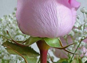 Photo of Escribir En Foto Una hermosa foto de flor blanca en púrpura