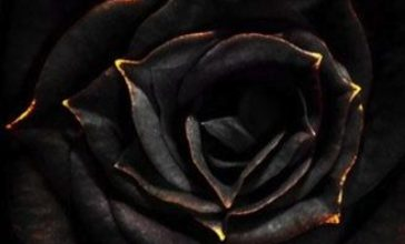 Photo of Escribir En Foto Una imagen de una rosa con rocío de agua