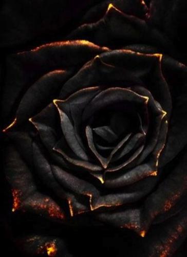 Escribir En Foto Una imagen de una rosa con rocío de agua 1 - Escribir En Foto Una imagen de una rosa con rocío de agua