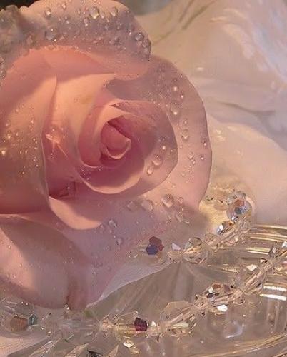 Escribir En Foto Una imagen de una triste rosa roja 1 - Escribir En Foto Una imagen de una triste rosa roja