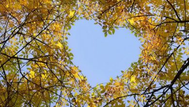 Escribir En Foto corazones pequeños 390x220 - Escribir En Foto corazones pequeños