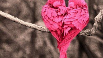 Escribir En Foto corazones tumblr 390x220 - Escribir En Foto corazones tumblr