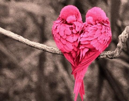 Escribir En Foto corazones tumblr - Escribir En Foto corazones tumblr