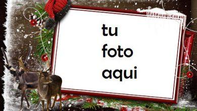 Photo of Esperando A Papá Noel En El Frío Bosque De Invierno Marco Para Foto