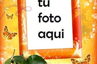Felicidad Mandarina Marco Para Foto 333x220 - Felicidad Mandarina Marco Para Foto