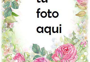Photo of Feliz Cumpleaños Con Las Flores Rosadas Más Bellas Marco Para Foto