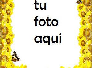 Flor De Girasol Marco Para Foto 298x220 - Flor De Girasol Marco Para Foto