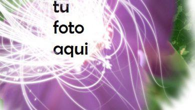 Flor Grande Rosa Marco Para Foto 390x220 - Flor Grande Rosa Marco Para Foto