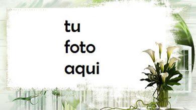 Flores De Loto Blanco Marco Para Foto 390x220 - Flores De Loto Blanco Marco Para Foto