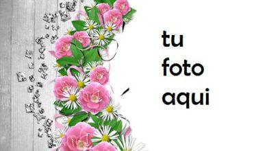 Flores De Mandolina Marco Para Foto 390x220 - Flores De Mandolina Marco Para Foto
