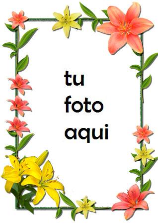Flores Lilas Rojas Y Amarillas Marco Para Foto - Flores Lilas Rojas Y Amarillas Marco Para Foto