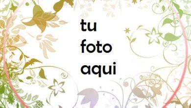 Flores Marco Para Foto 390x220 - Flores Marco Para Foto