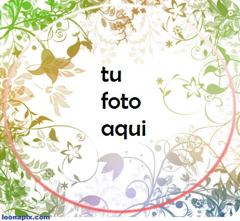 Flores Marco Para Foto - Flores Marco Para Foto