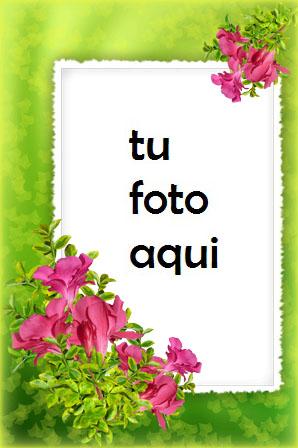 Flores Tiernas Marco Para Foto - Flores Tiernas Marco Para Foto