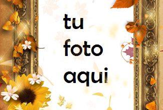 Flores Tristes Secas Marco Para Foto 325x220 - Flores Tristes Secas Marco Para Foto